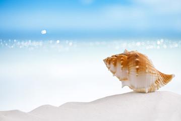 tropical sea  shell on white Florida beach sand under the sun li