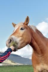 Bimba imbocca un cavallo