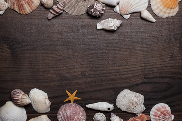different seashells over brown wooden background