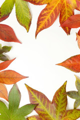 Autumn frame - colorful maple leaves on white background.