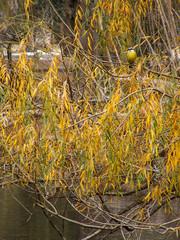 Bird In Autumnal Tree