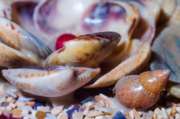 Composition for aquarium