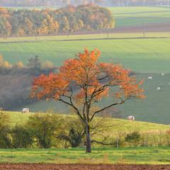 le bel arbre solitaire