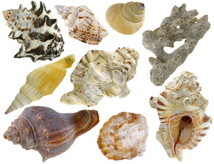 A collection of sea shells isolated on white background