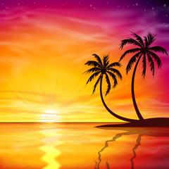 Fototapeta zachód słońca drzewa palmowe
