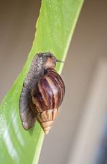 snail on bird of paradise flower leaf