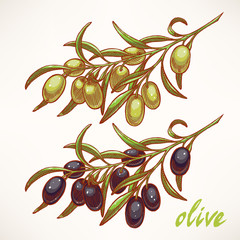 two olive tree branches