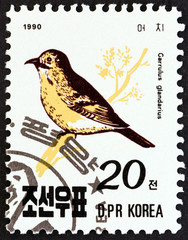 Eurasian jay, Garrulus glandarius (North Korea 1990)