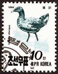 Common moorhen, Gallinula chloropus (North Korea 1990)