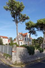 maison de vacances et arbres