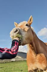 Cavallo goloso