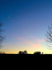 夕暮れ時の木々と三日月と