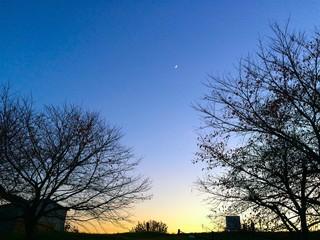空に映える木のシルエット