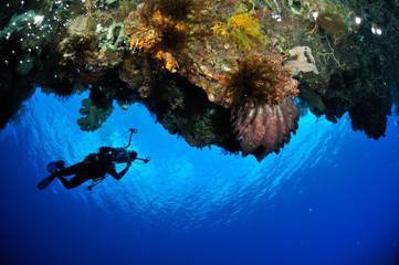 Diver, barrel sponge Xestospongia in Banda, Indonesia underwater