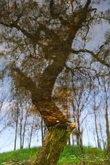Baum spiegelt sich im Wasser optische Täuschung