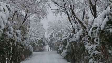 snowfall on trees and snowy roads
