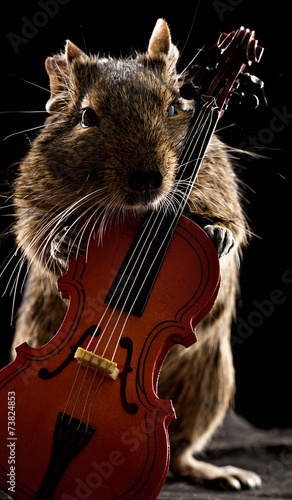 Fotobehang Eekhoorn degu hamster standing with cello
