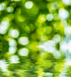 Abstract circular green bokeh reflected in water.