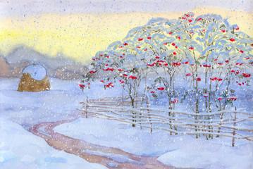 Snow bush viburnum