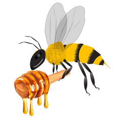 bee carrying honey dripping isolated