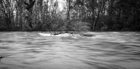 Ticino river during a winter flood. BW image