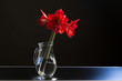 amaryllis flower in a jar