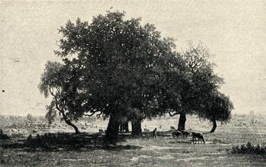 Oak Grove, Apremont (Théodore Rousseau , 1850-52)