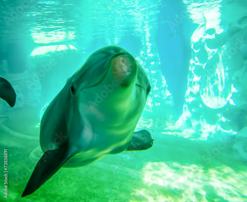 In de dag Dolfijn dolphin posing for camera underwater