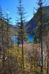 Tall trees with mountain and lake at Jiuzhaigou