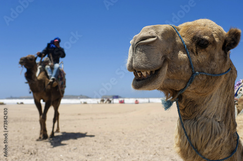 Foto op Canvas Kameel Kamel am Strand von Essaouira, Marokko