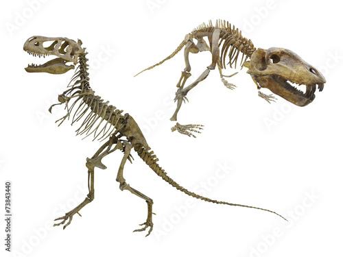 Poster dinosaur's skeleton