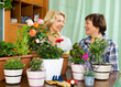 Two elderly housewifes taking care of decorative plants