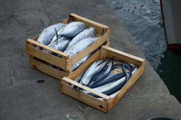 garfish and skipjack