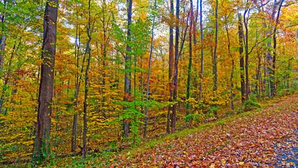 US National Arboretum in the Fall Washington DC