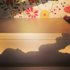 baby's shadow