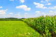 Corn field on sunny summer day in Paczultowice village, Poland
