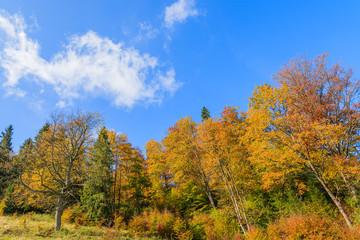Colorful trees in autumn season in Pieniny Mountains, Poland