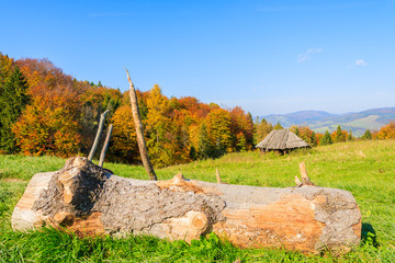 Tree trunk on green meadow and hut in autumn, Pieniny Mountains
