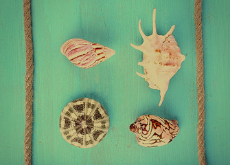 Sea souvenirs on green background
