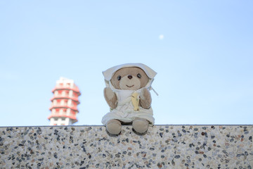 Dream cute teddy bear