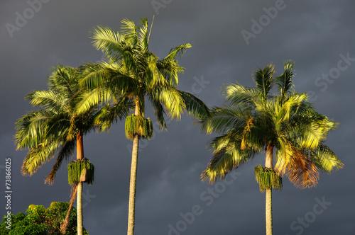La Réunion - Les trois palmiers