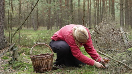 Happy woman picking and cleaning wild mushroom in the forest.