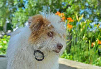 Small white dog 4