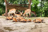 Zoo. herd of antelopes