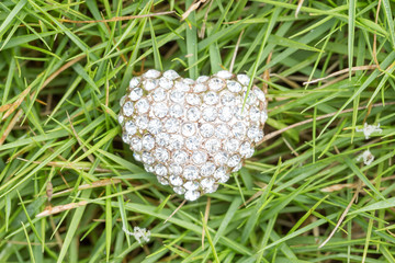 heart love jewelry on grass