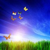 Fototapety High resolution image of fresh green grass, flying butterflies.