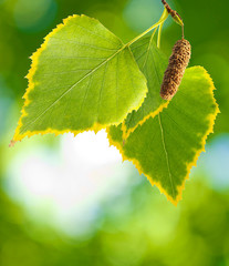 image of a leaf on a green background
