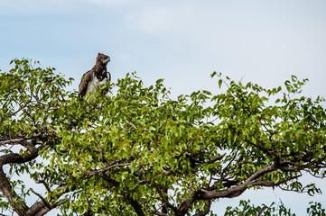 Aquila, Namibia, Africa