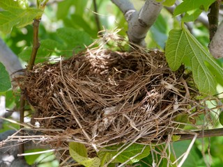 A bird nest in a tree