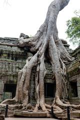 Ta Prohm Khmer ancient temple , Angkor Wat Cambodia.